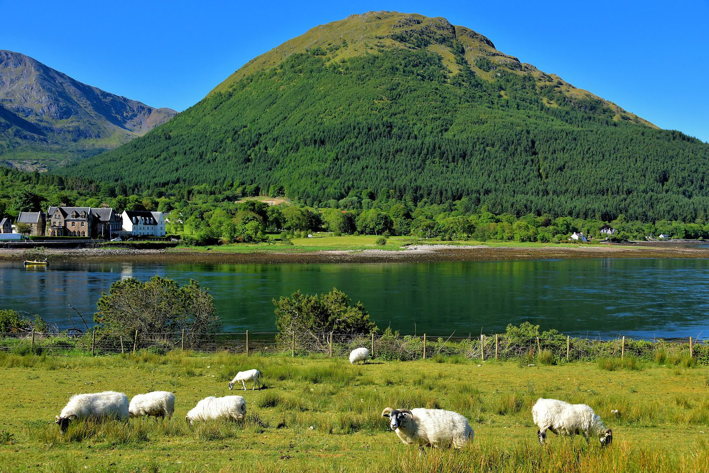 Scotland Highlands Ballachulish Sheep Loch 1440x961